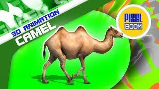 Green Screen Camel Walks Runs Dies - PixelBoom 3D Animations