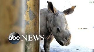 Rhinoceros, hairdressers and vigils: World in Photos, Aug 6