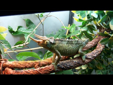 September Reptile Room Tour 2016!