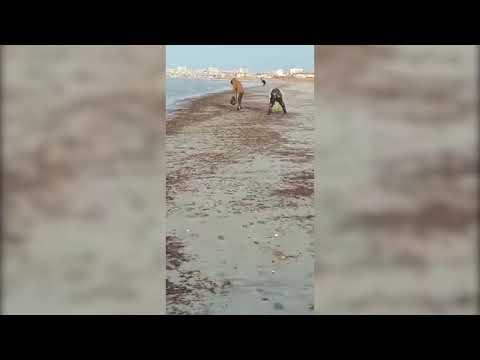 В Казахстане после шторма на берег высыпало тысячи раков