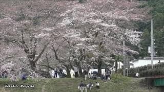 島田の家山橋を渡る大井川鐡道(旧近鉄)16000系 The former Kintetsu 16000 Series as Oigawa Railway, Japan 31/Mar/2019