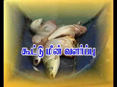 Pon Vilaiyum Bhoomi 17/08/2015