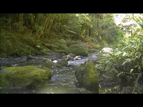 Relaxing and beautiful birdsong of New Zealand