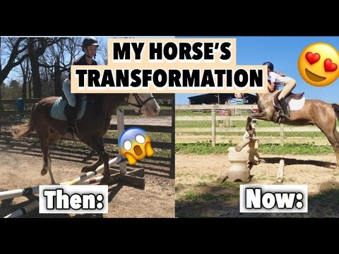MY HORSE'S TRANSFORMATION | completely untrained to jumping 2ft+