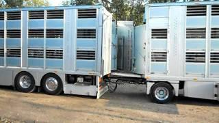Scania V8 Zilio  Scarico bestiame