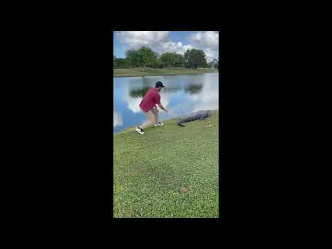 Florida golfer snatches ball from gator's tail