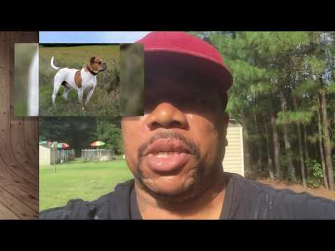 ABOUT THE REAL OLDE ENGLISH BULLDOGGES