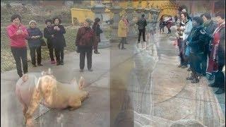 Chuyện có thật: Thiên Bồng Nguyên Soái bị đày xuống trần gian quỳ lạy trước cửa phật để sám hối!!