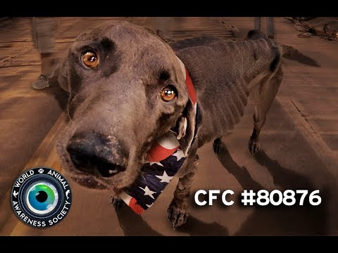 World Animal Awareness Society CFC 80876 American Strays Project Best Of Combined Federal Campaign