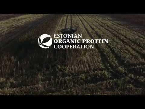 Organic hemp harvesting in Estonia