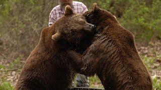 Grizzly Bear Bath Turns Wild
