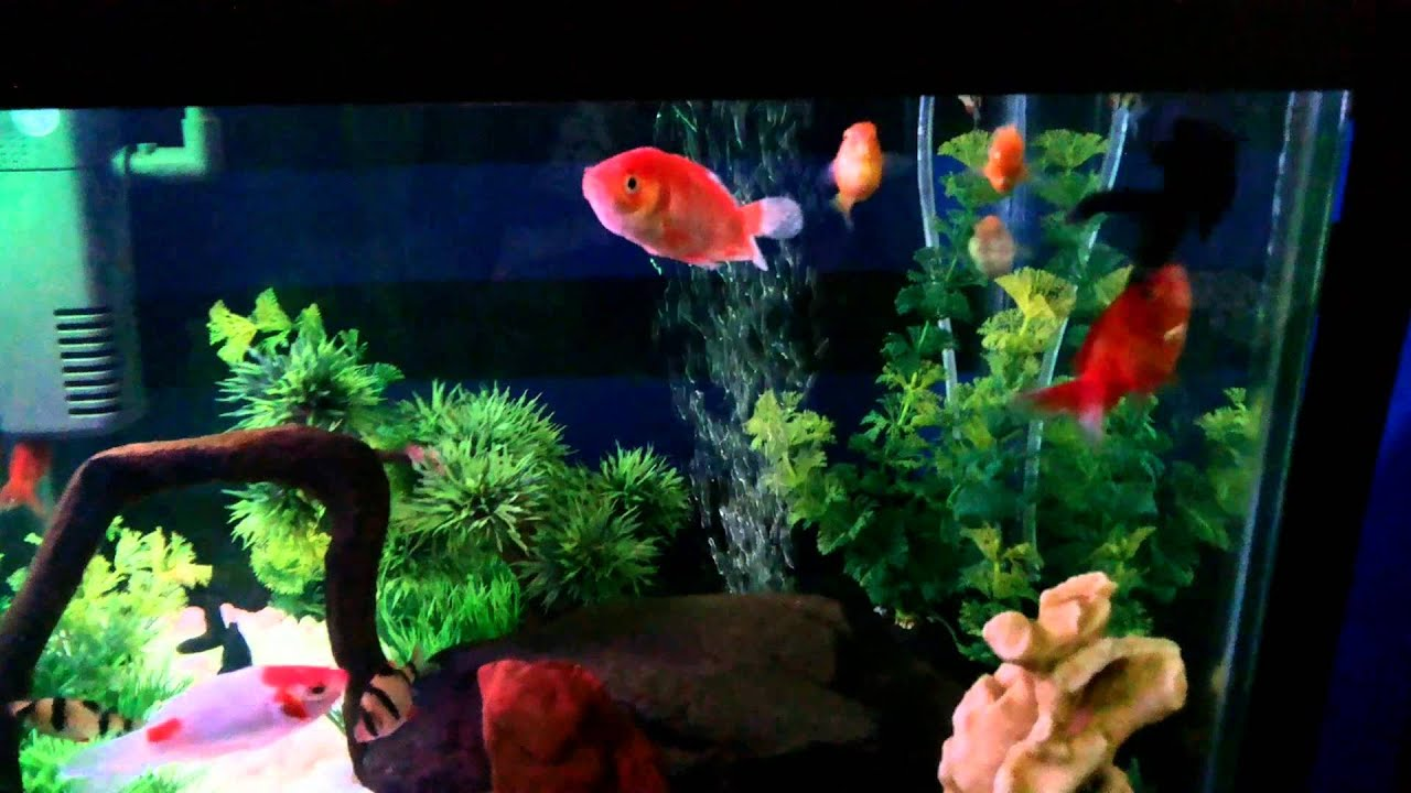 Aquarium Minimalis - YouTube
