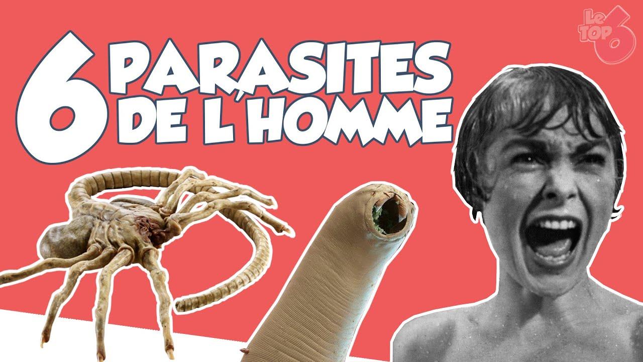 les parasites de l homme a férgek megakadályozhatják a teherbeesést