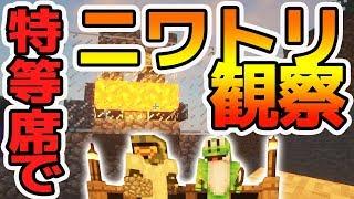 【日刊Minecraft】ニワトリが朝日と共に燃える!?驚きの実験内容とは?真・最強の匠は誰か!?絶望的センス4人衆がMinecraftをカオス実況第四話!