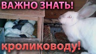 Что делать если крольчиха умерла, раскидала, съела крольчат?(Крольчиха съела или раскидала крольчат? Умерла самка? – ситуации, с которыми сталкивалось большинство..., 2015-12-08T18:53:44.000Z)