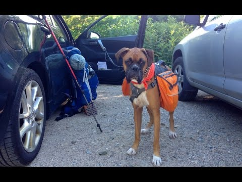 Hiking and Camping with my Boxer Dog!