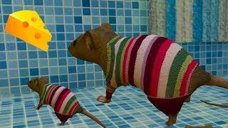 - СИМУЛЯТОР Маленькой МЫШИ 3 РОДИЛСЯ МЫШОНОК у мышки Напала мышь с кошкой детский летсплей ПУРУМЧАТА