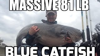 Massive 81 lb Blue Catfish