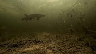 Щука зашла на точку Зимняя рыбалка 2020