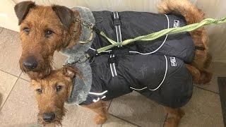 Видео обзор зимней куртки для собак Winter Jacket от