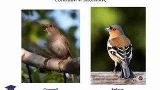 'Зимующие и перелетные птицы', презентация для детей