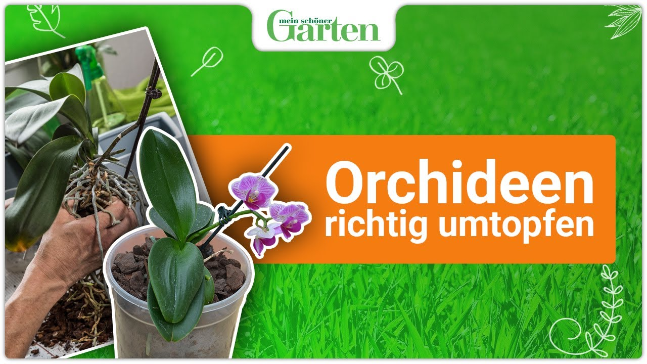 gartentipp orchideen richtig umtopfen youtube. Black Bedroom Furniture Sets. Home Design Ideas