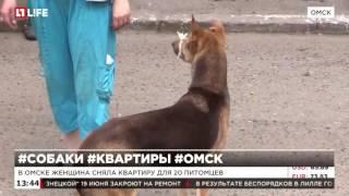 В Омске женщина сняла квартиру для 20 собак
