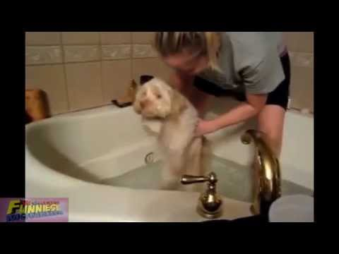 Funny Dogs Bathing Compilation - They really don't want to Bath