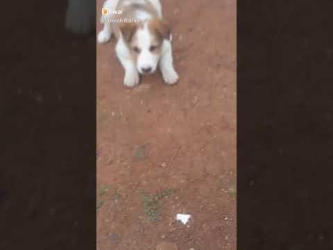 Dog movament