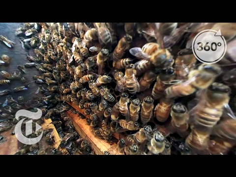 The Bees That Give You Almonds | The Daily 360 | The New York Times