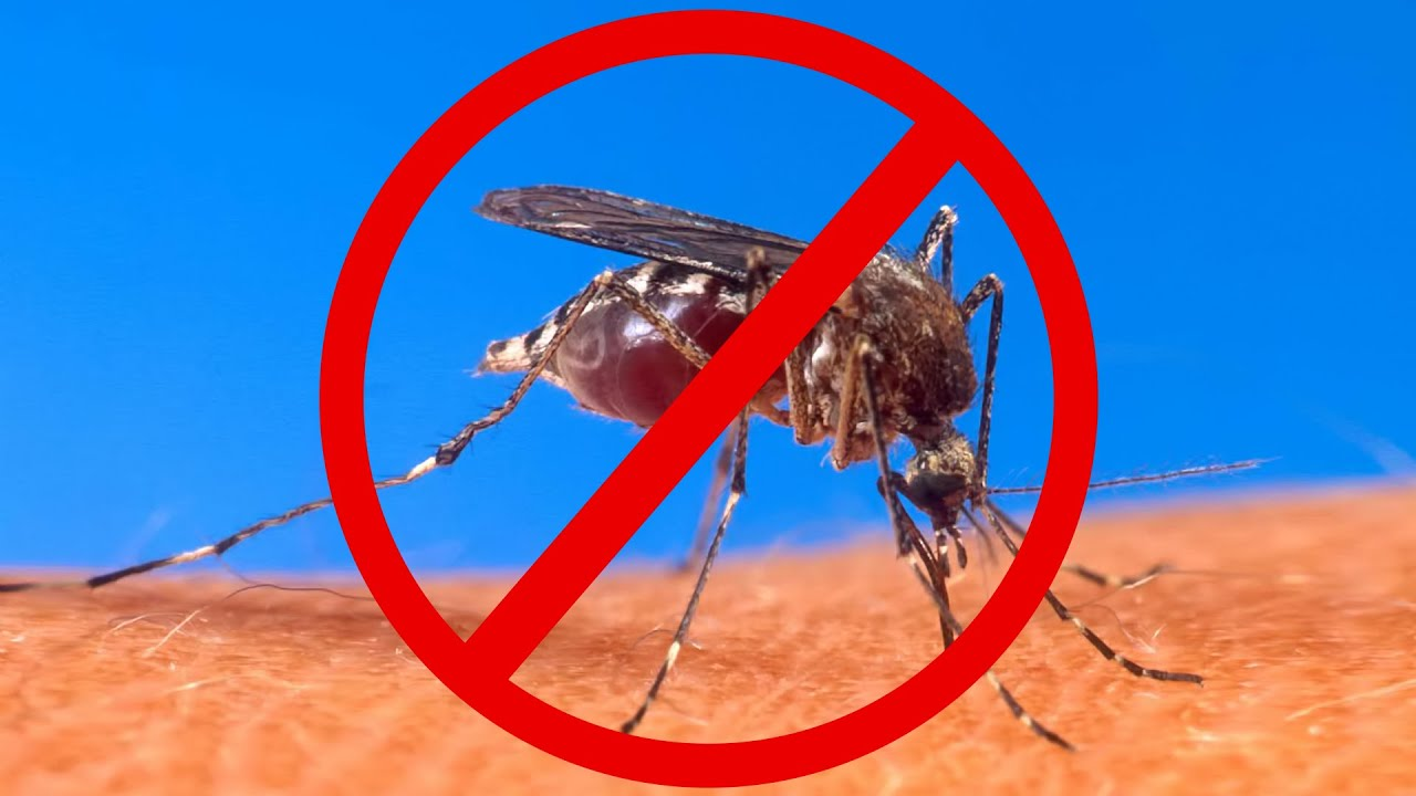 Keep Mosquitoes Away... Without Bug Repellent!   YouTube