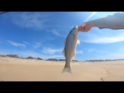 little-striped-bass-(~18-inches)-+-surfperch
