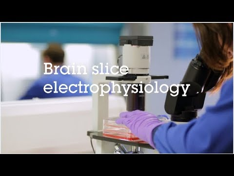 Brain Slice Electrophysiology Video Protocol