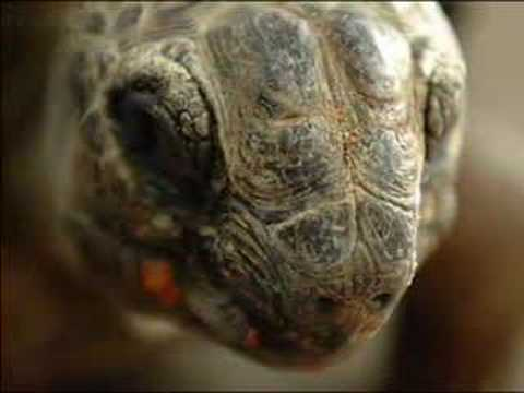 Old Turtle (read by Mike Pinder)