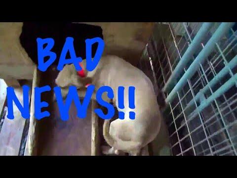 BAD NEWS 😢😢😢 at Hollis Farms