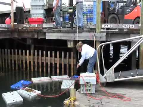 Swan's Island: Wharf Worker -The  Lobsterman's Friend