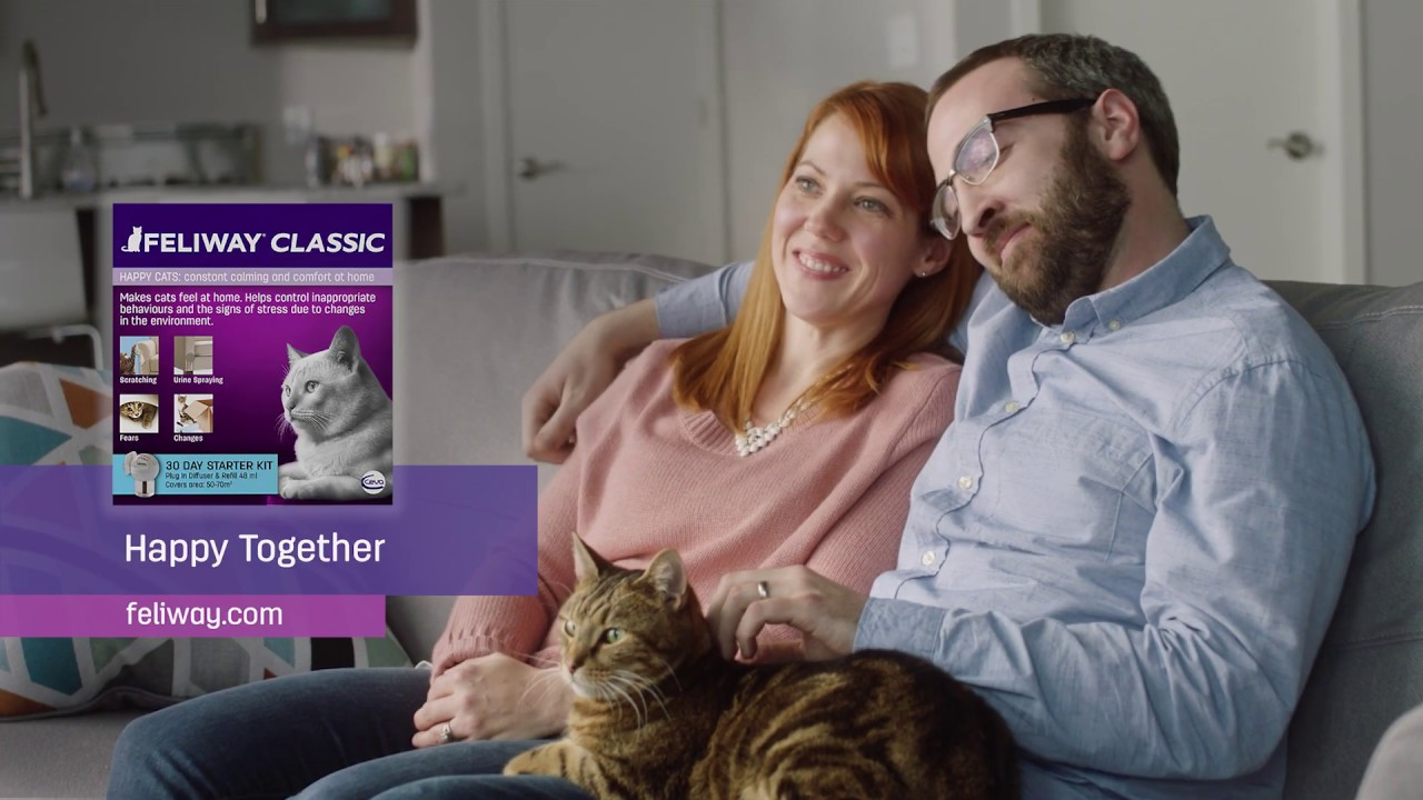 FELIWAY - You Would Not Put Up With It Someone Else Did It - TV Ad