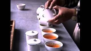 Tea tasting in Sikkim