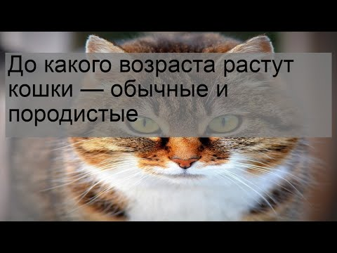 Вопрос: До скольки лет гуляют кошки?