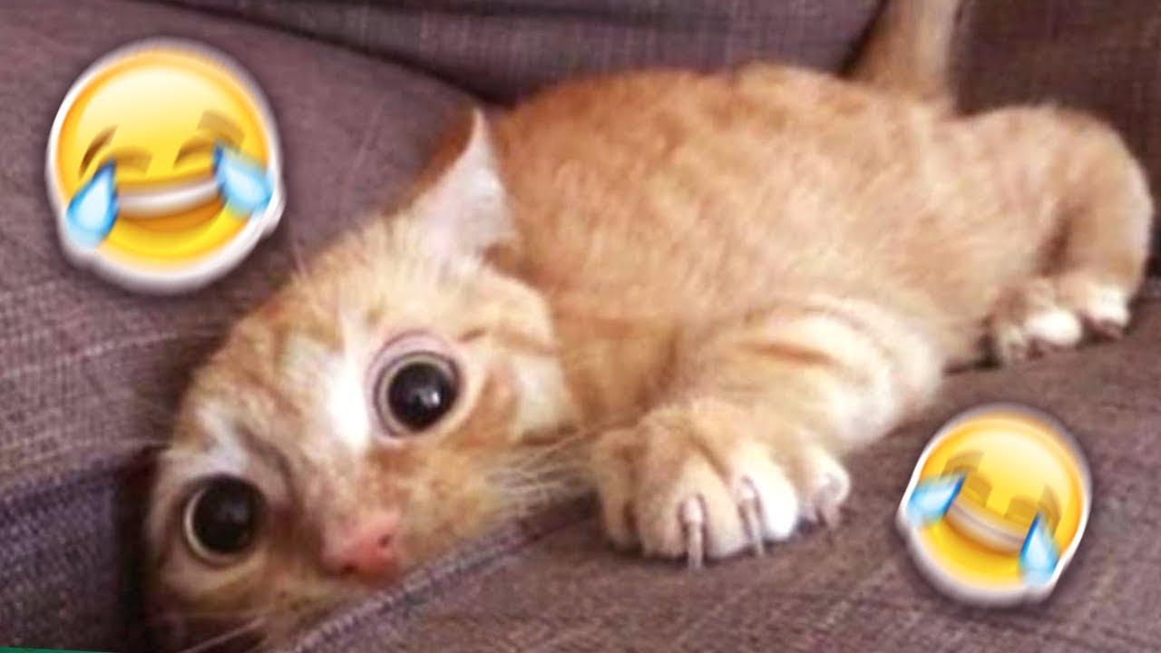 Katzenvideos Auf Youtube