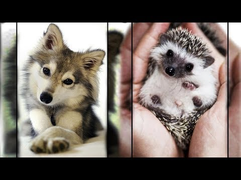 Cutest Animals In The World 1 - Super Cute Pets Bring Warmth
