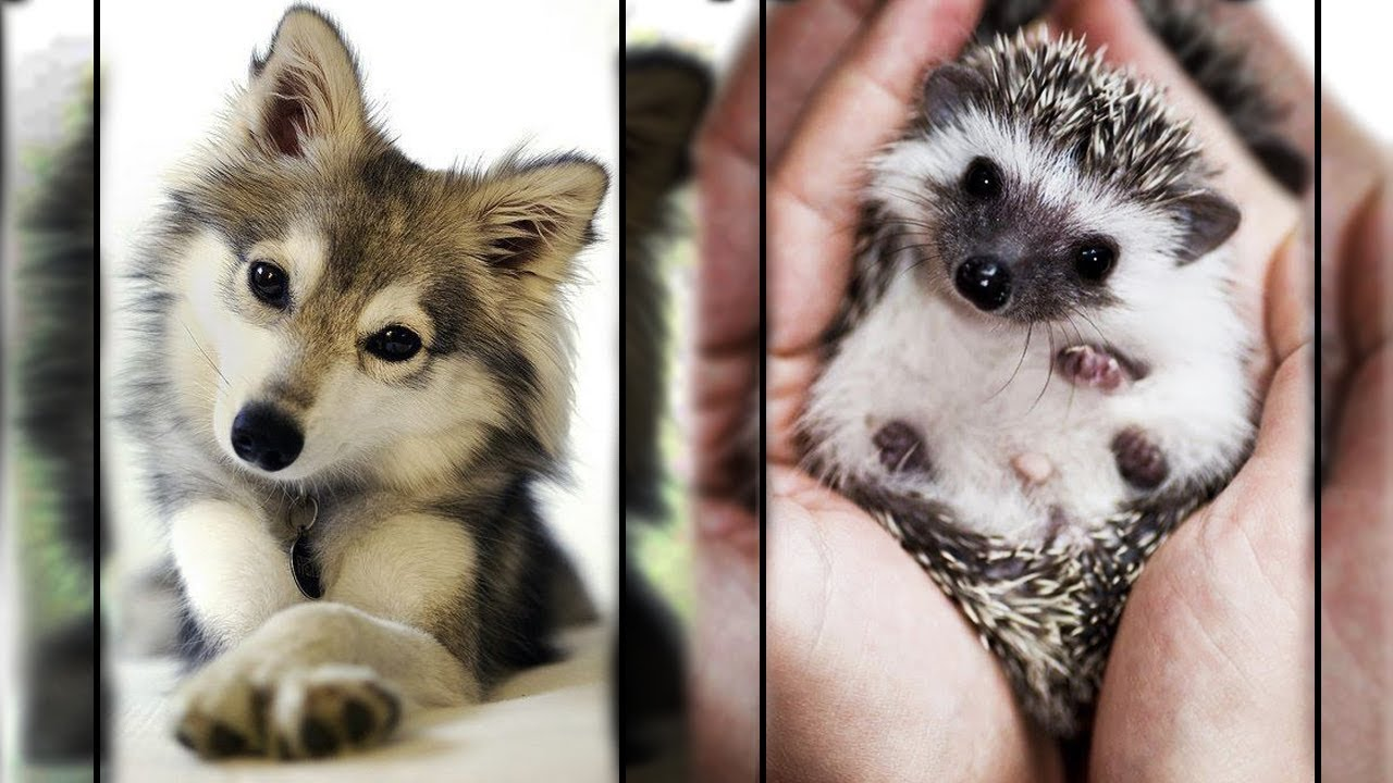 Cutest Animals In The World ????1 - Super Cute Pets Bring Warmth ????