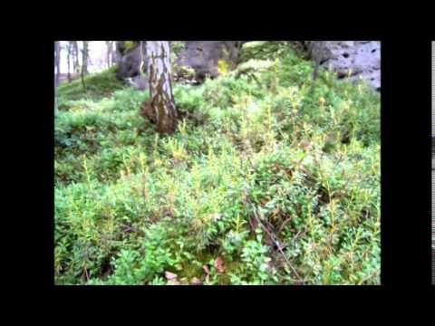 Z lesů vod a strání díl druhý
