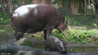 540 animals born in Singapore wildlife parks