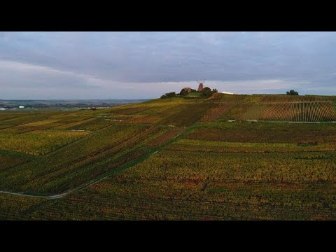 You are here - Woodland wonders: Autumn in France's Champagne region