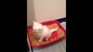 Котенок и туалет / funny kitten