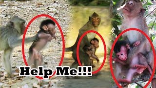 Million Sad When See Small Young Monkey Catches Newborn Baby Running and Climbing On High Tree
