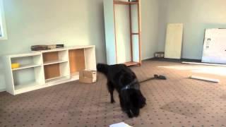Canine Nose Work Nz Interior Search 2014 Frankie