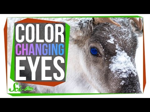 Reindeer's Color Changing Eyes Give Them Night Vision