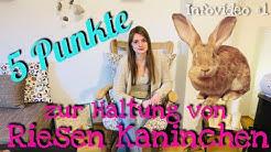 5 Punkte zur Haltung von Riesen Kaninchen | Infovideo #1